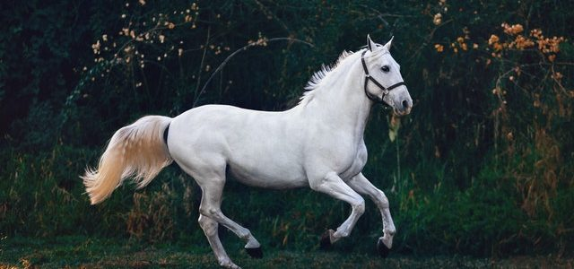 Przegląd konia przed jazdą